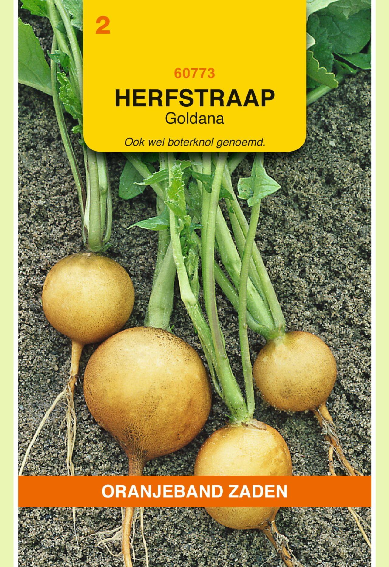Brassica rapa 'Goldana' plant