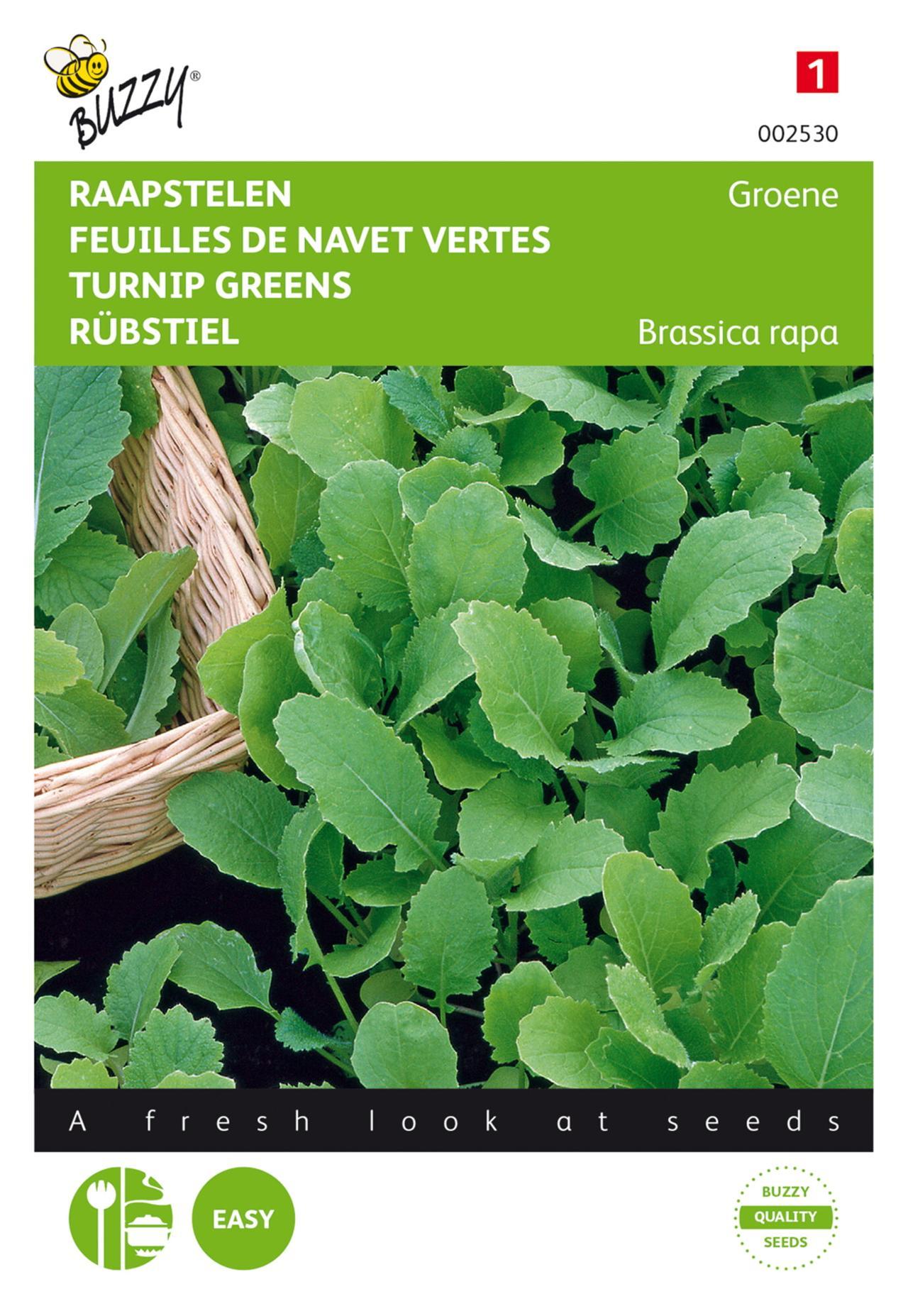 Brassica rapa 'Groene' plant