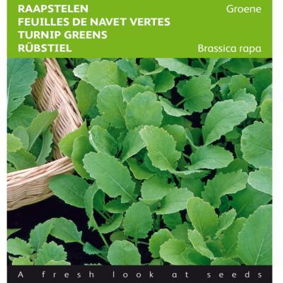 brassica-rapa-groene