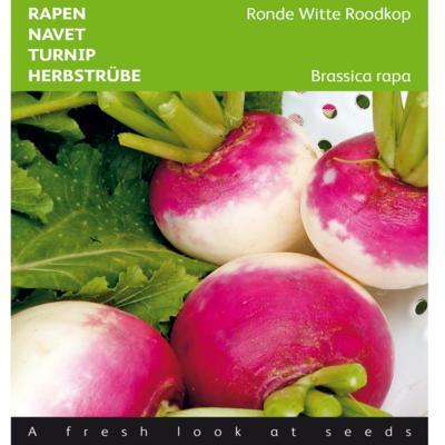brassica-rapa-ronde-witte-roodkop-de-nancy