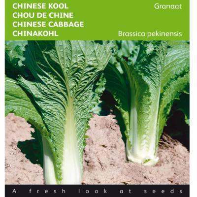 brassica-rapa-subsp-pekinensis-granaat