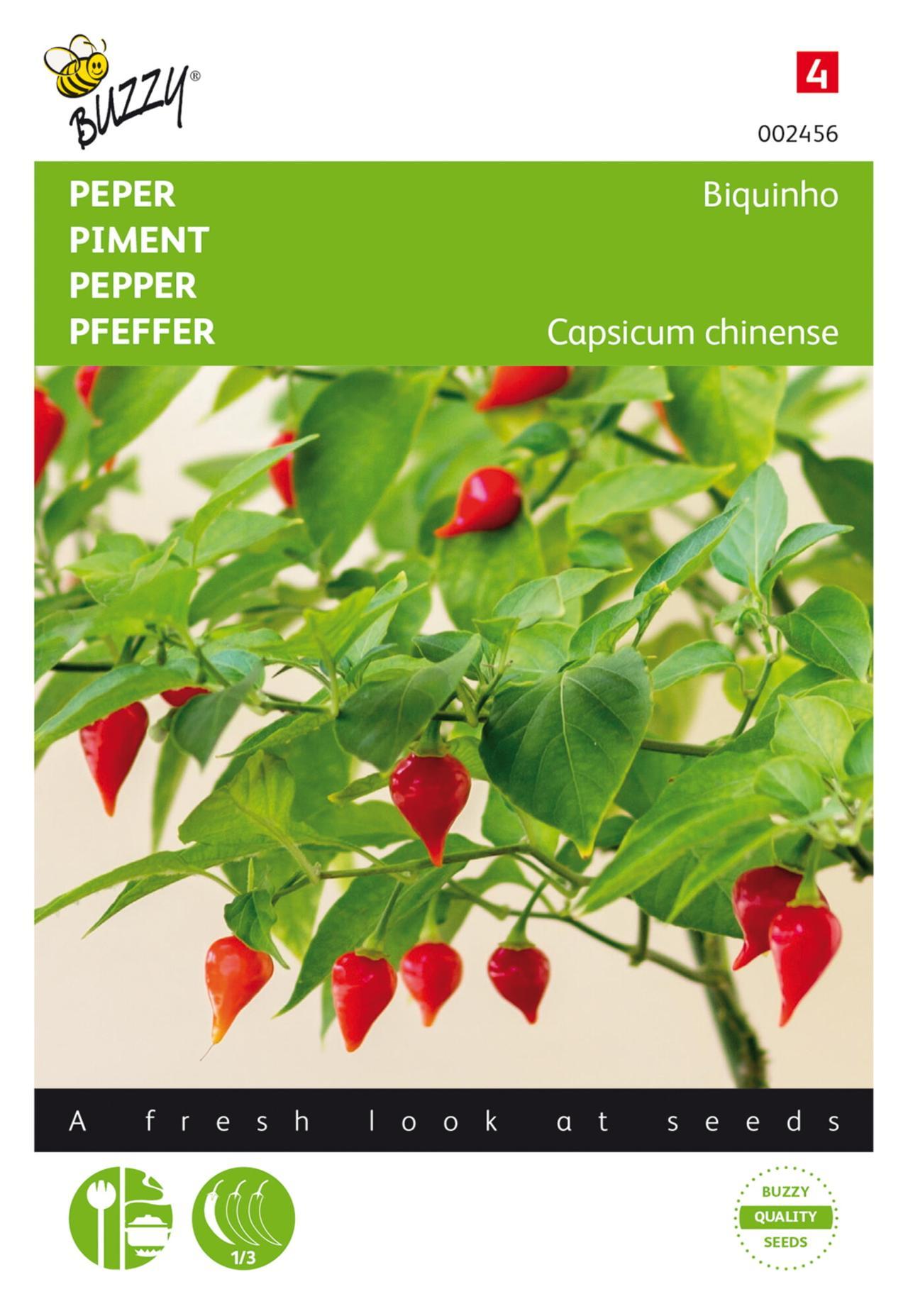 Capsicum chinense 'Biquinho' plant