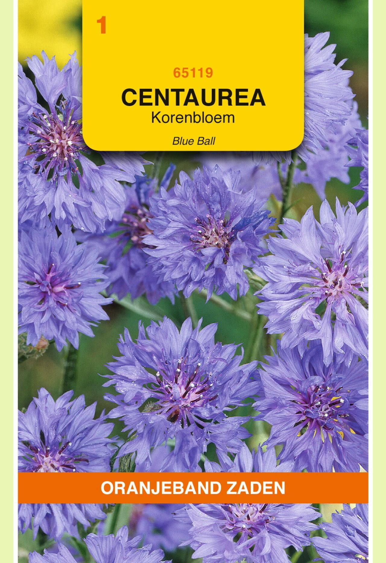 Centaurea cyanus 'Blue Ball' plant