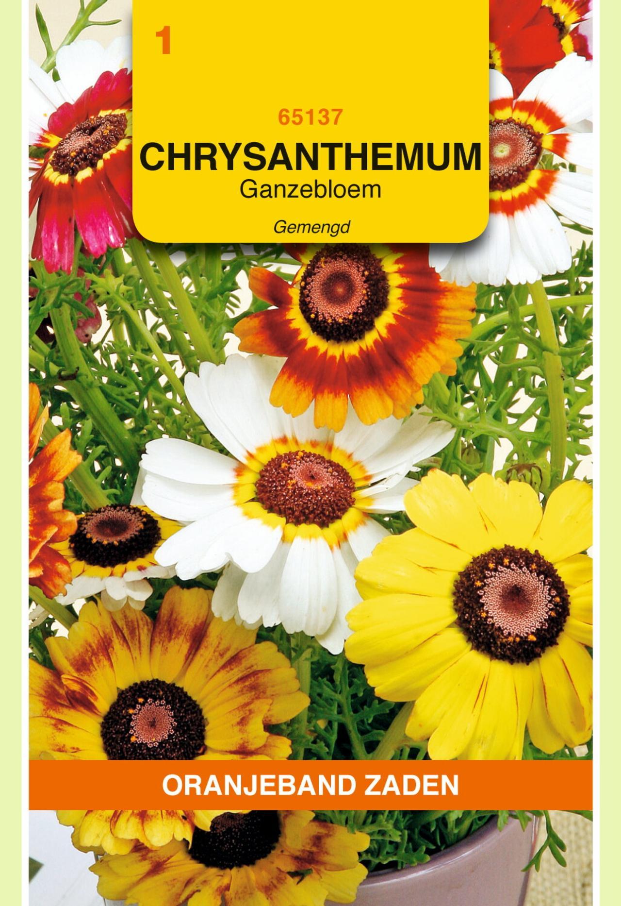 Chrysanthemum carinatum plant