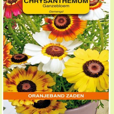 chrysanthemum-carinatum