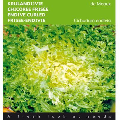 cichorium-endivia-de-meaux