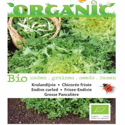 cichorium-endivia-grosse-pancaliere-bio