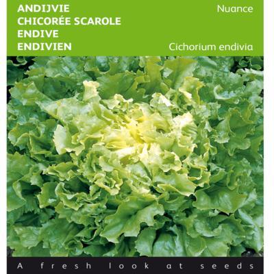 cichorium-endivia-nuance