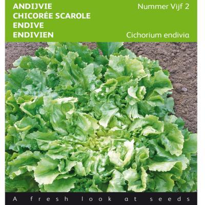 cichorium-endivia-nummer-vijf