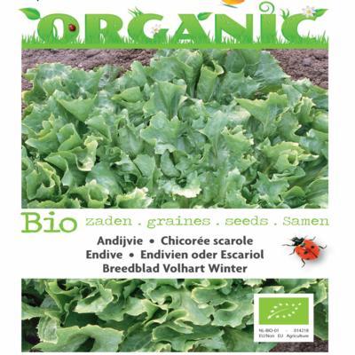 cichorium-endivia-volhart-winter-bio