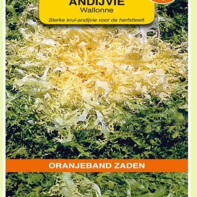 cichorium-endivia-wallonne-despa