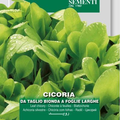 cichorium-intybus-bonda-foglie-larghe
