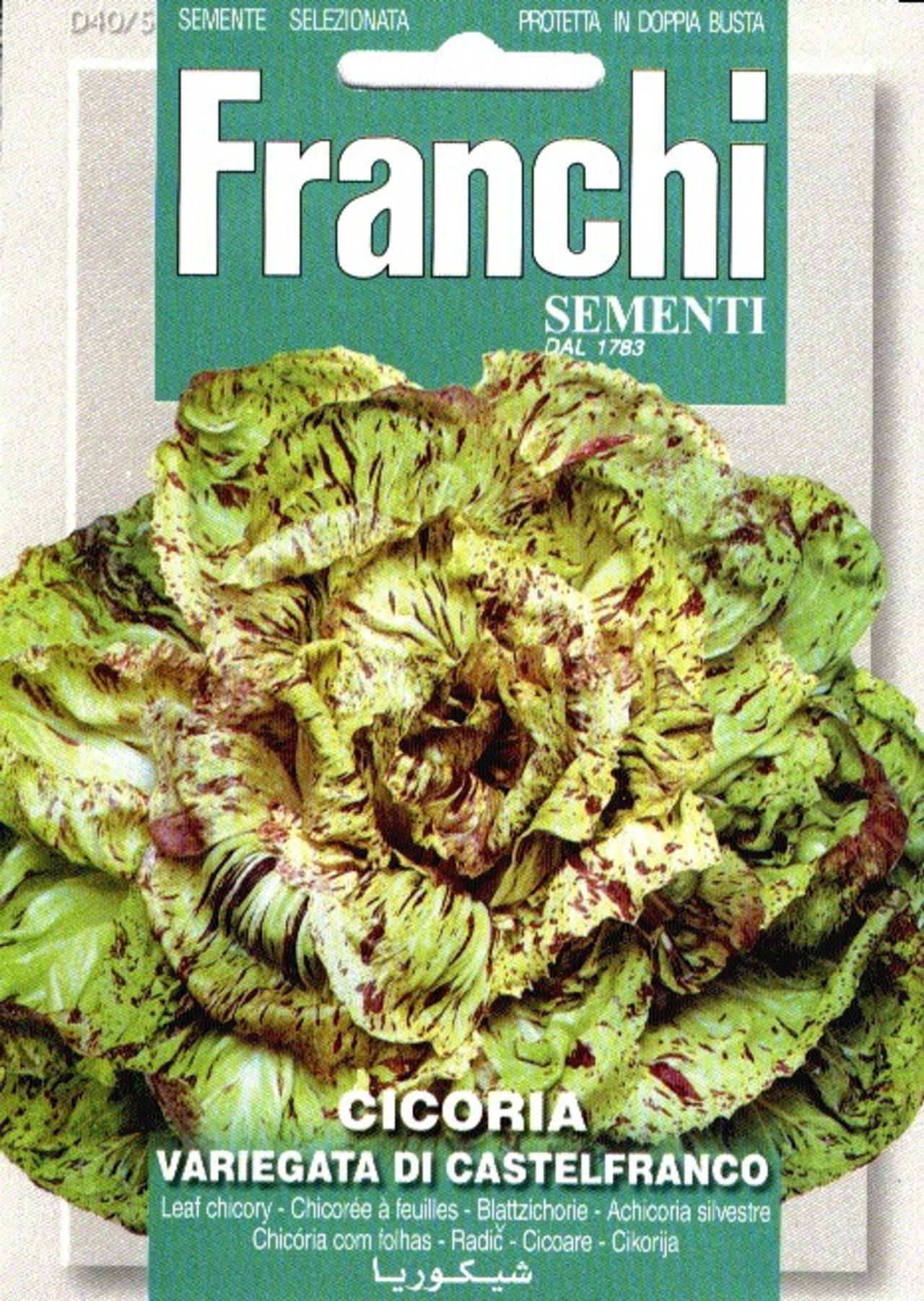 Cichorium intybus 'Castelfranco' plant