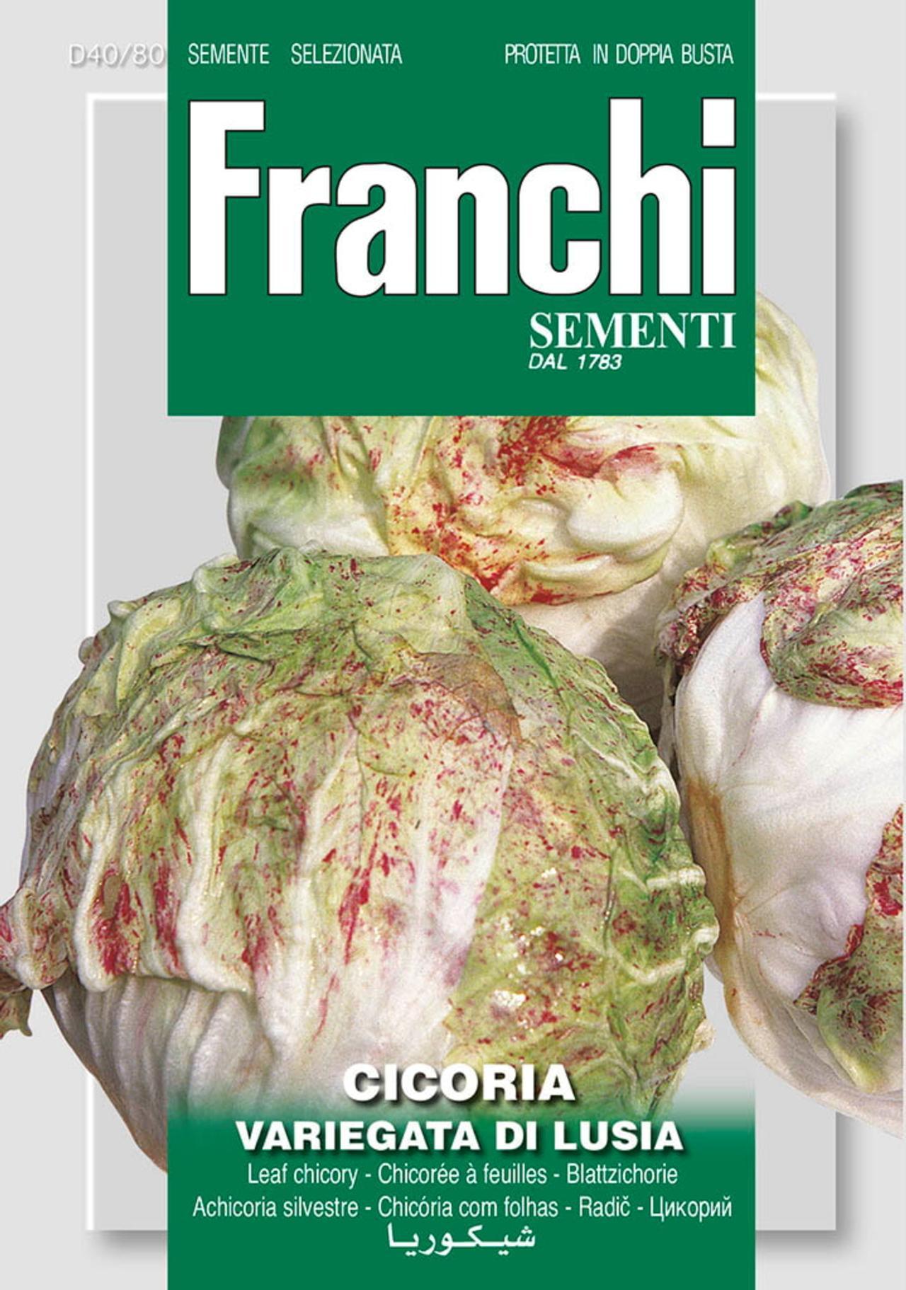 Cichorium intybus 'Di Lusia' plant