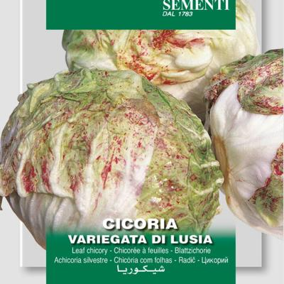 cichorium-intybus-di-lusia