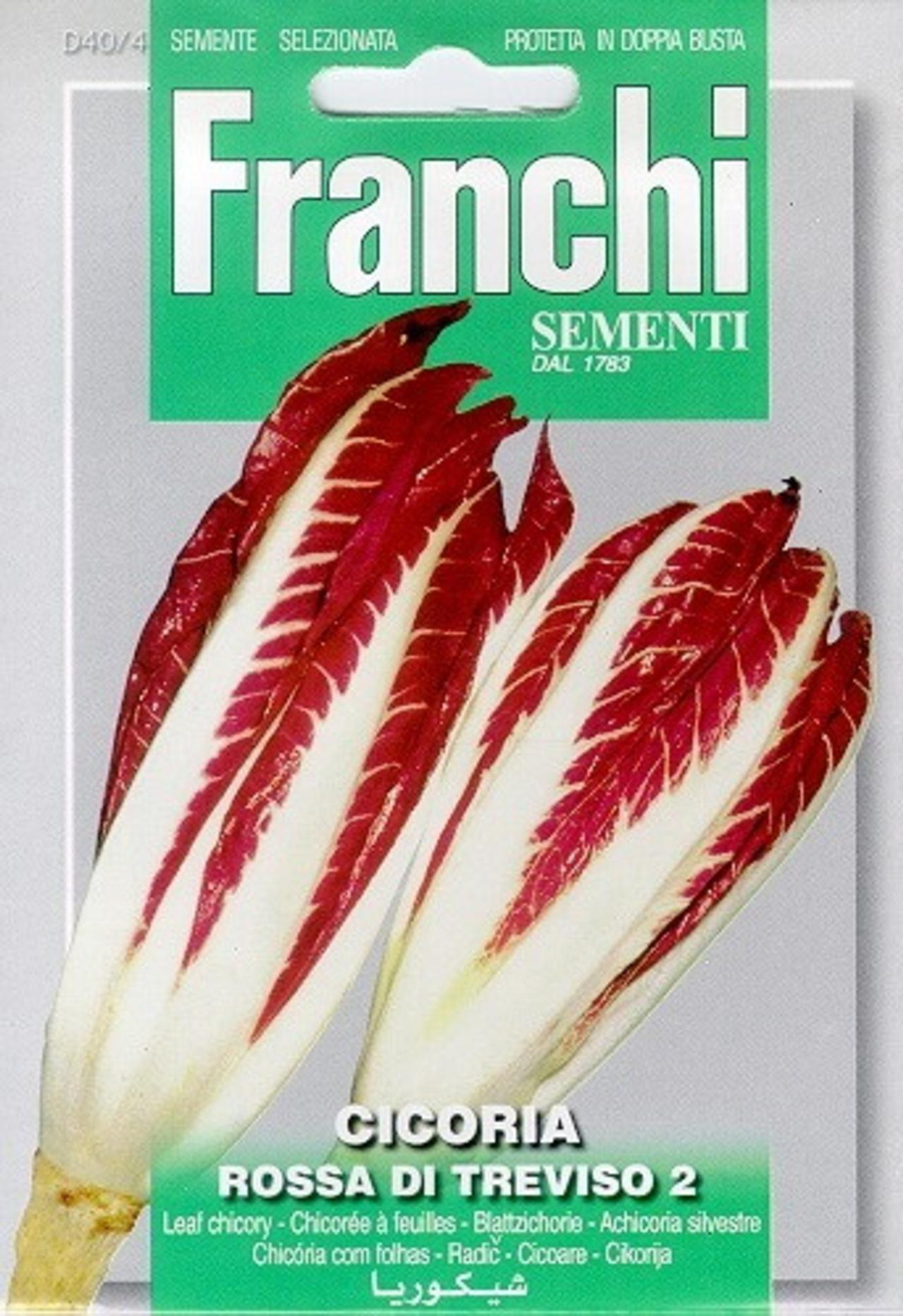 Cichorium intybus 'Di Treviso' plant