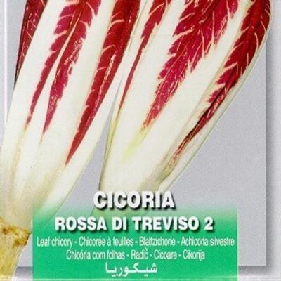 cichorium-intybus-di-treviso