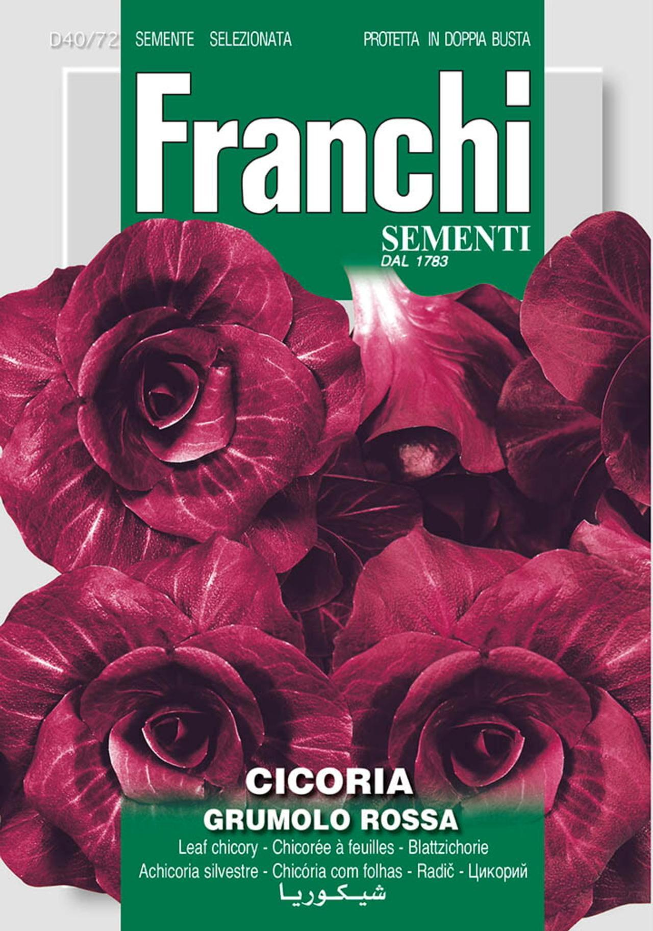 Cichorium intybus 'Di Verona Tardiva' plant