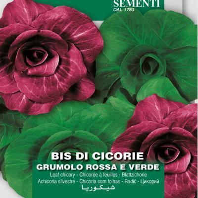 cichorium-intybus-grumolo-rosse-e-verde