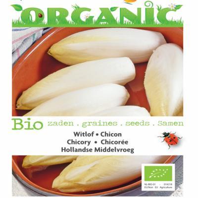 cichorium-intybus-hollandse-middelvroeg-bio