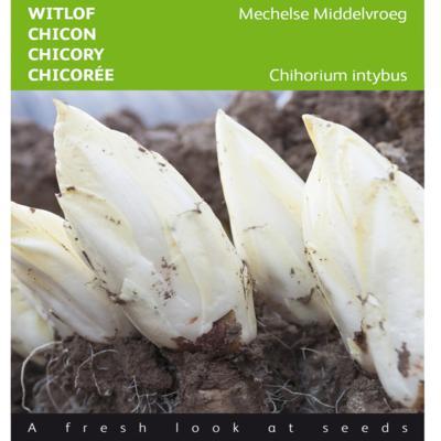 cichorium-intybus-mechelse-middelvroeg
