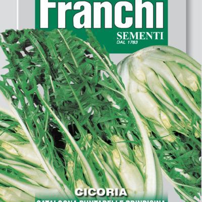 cichorium-intybus-puntarella-brindisina