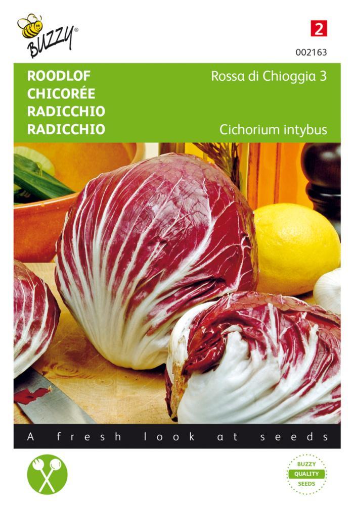 Cichorium intybus 'Rossa di Chioggia 3' plant