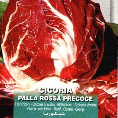 cichorium-intybus-rossa-precoce