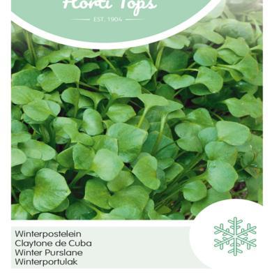 claytonia-perfoliata