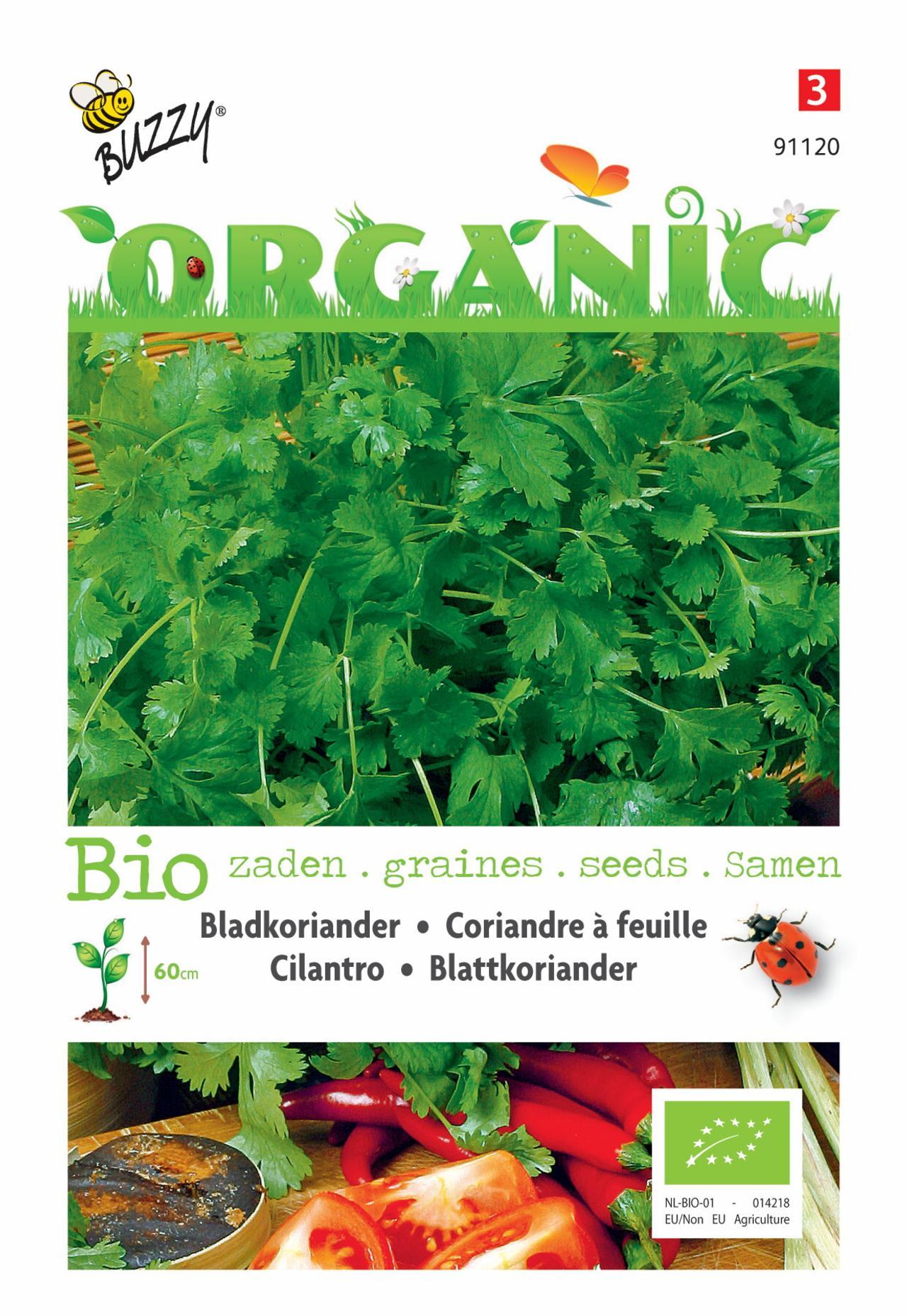 Coriandrum sativum (BIO) plant