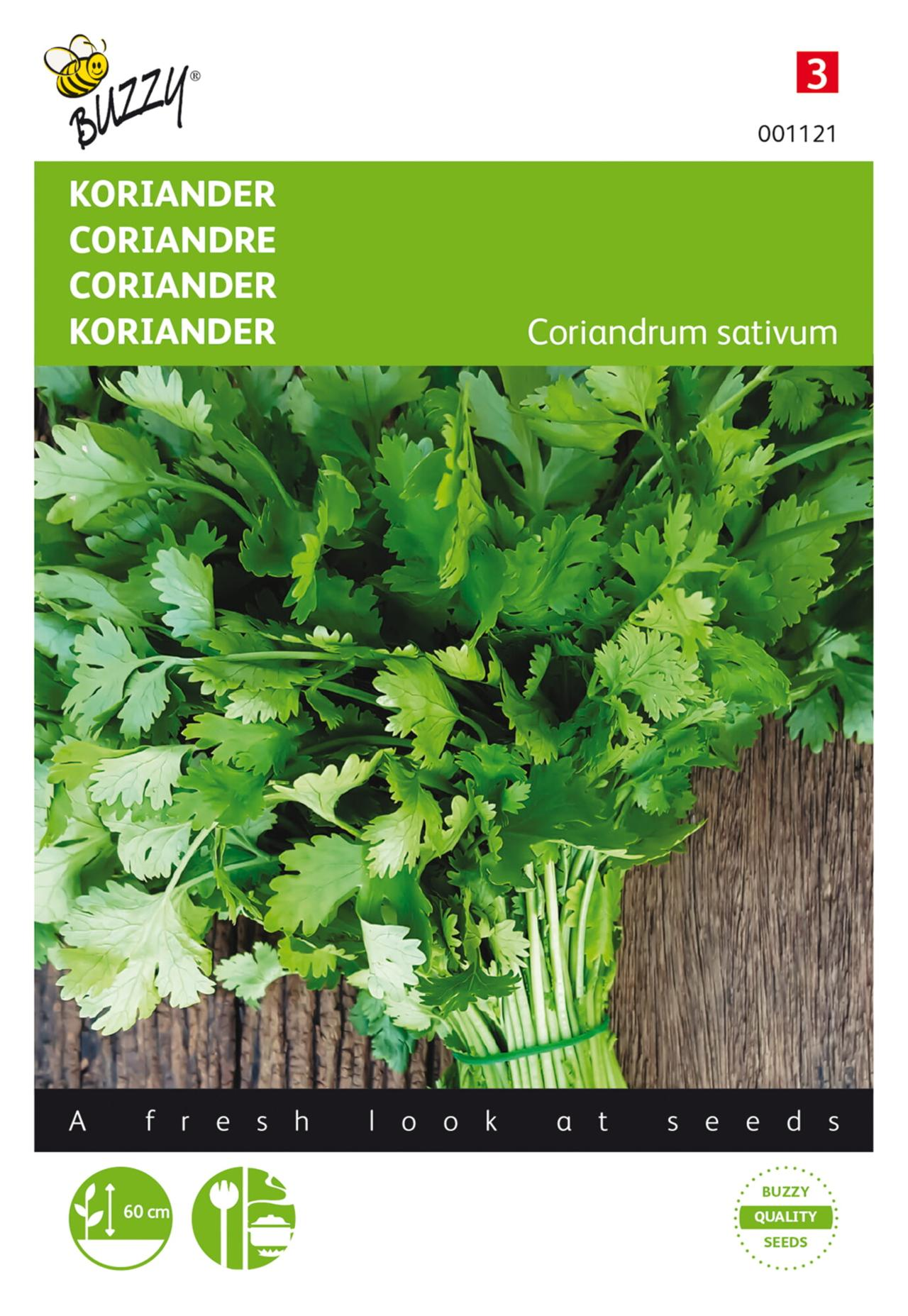 Coriandrum sativum 'grootzadig' plant