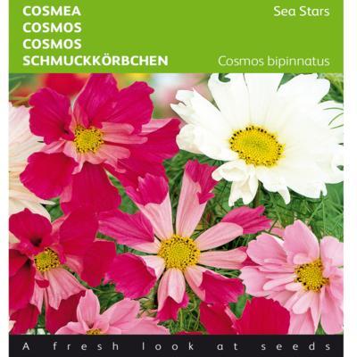 cosmos-bipinnatus-sea-stars