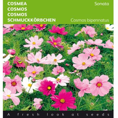 cosmos-bipinnatus-sonata