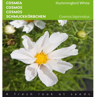 cosmos-bippinnatus-hummingbird-white