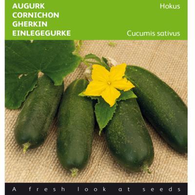 cucumis-sativus-hokus