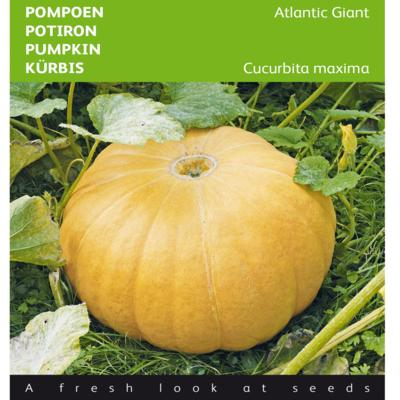 cucurbita-maxima-atlantic-giant