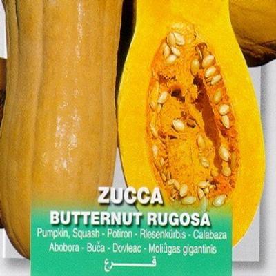 cucurbita-maxima-butternut-rugosa