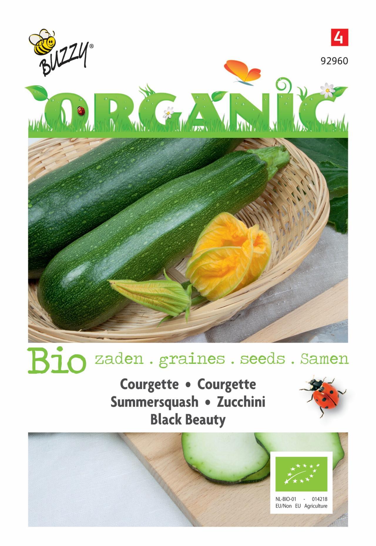 Cucurbita pepo 'Black Beauty' (BIO) plant