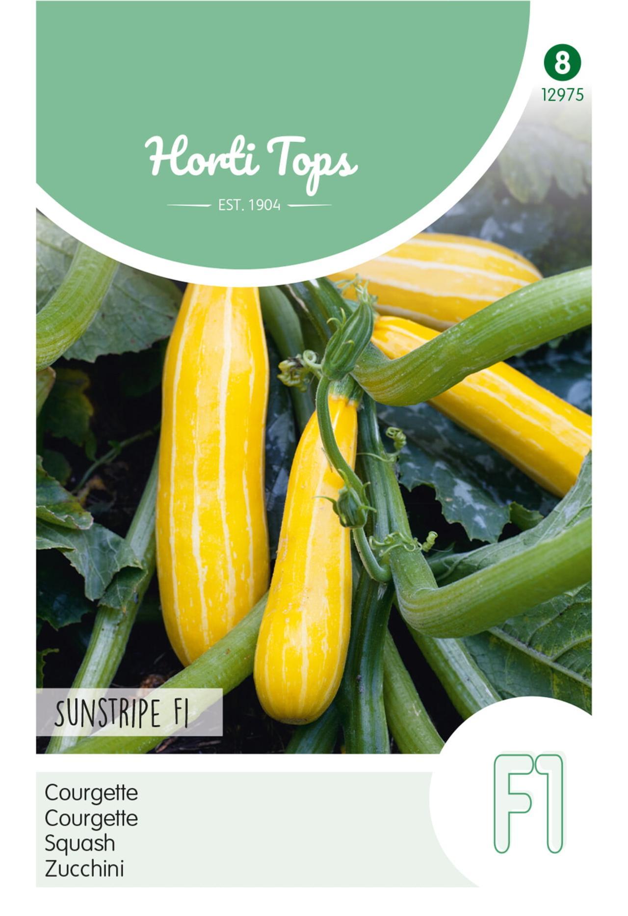 Cucurbita pepo 'Courgette Sunstripe F1' plant