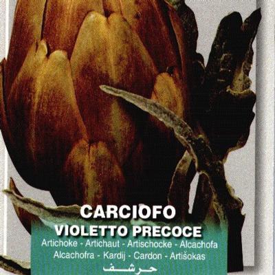 cynara-cardunculus-violetto-precoce