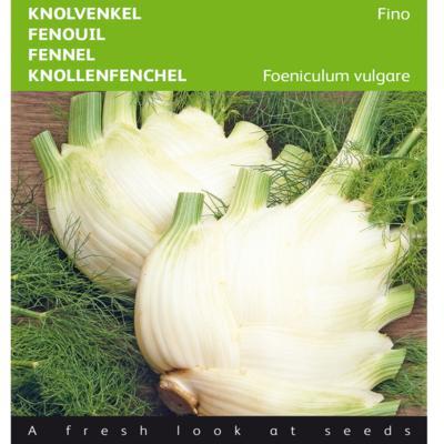 foeniculum-vulgare-fino