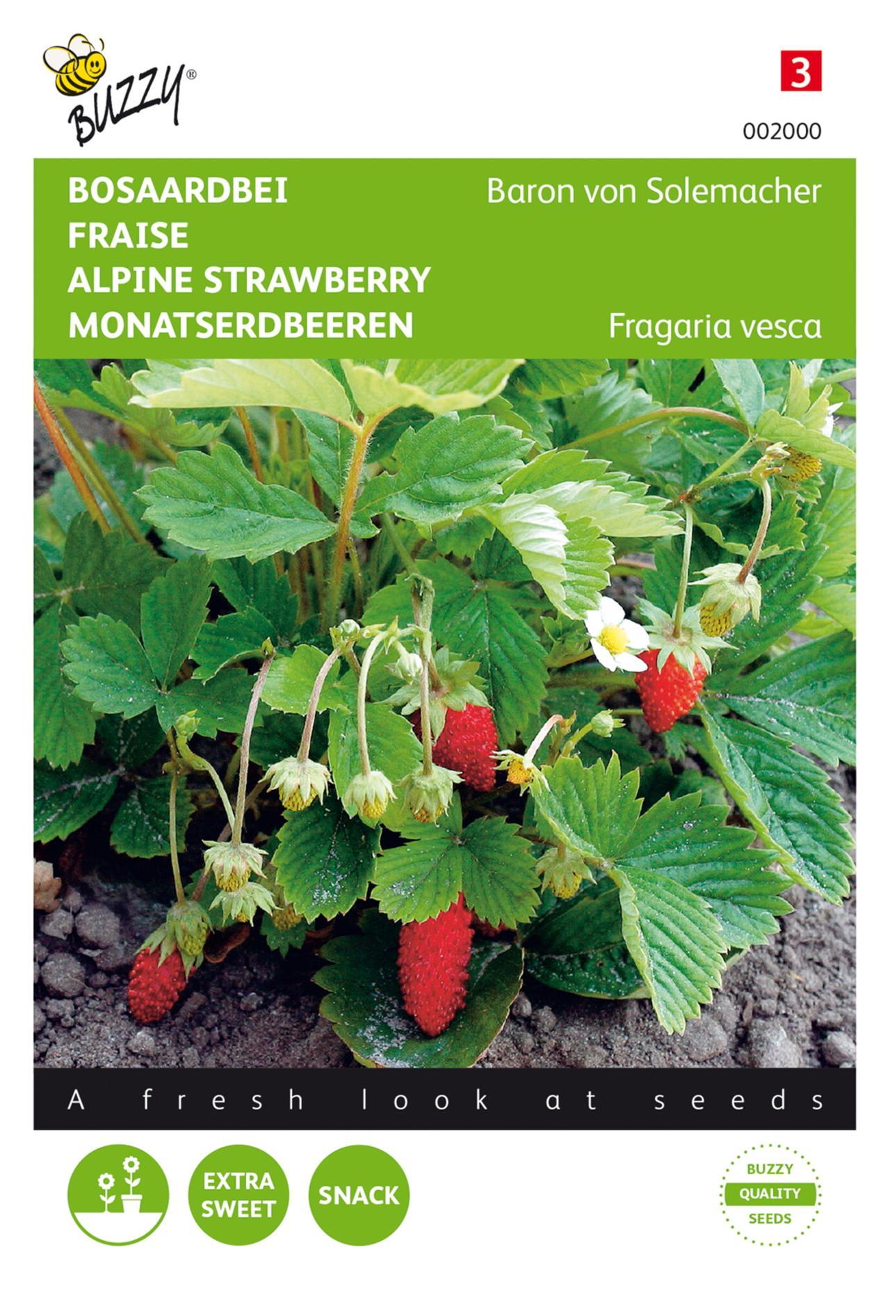 Fragaria vesca 'Baron von Solemacher' plant