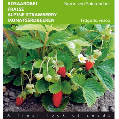 fragaria-vesca-baron-von-solemacher