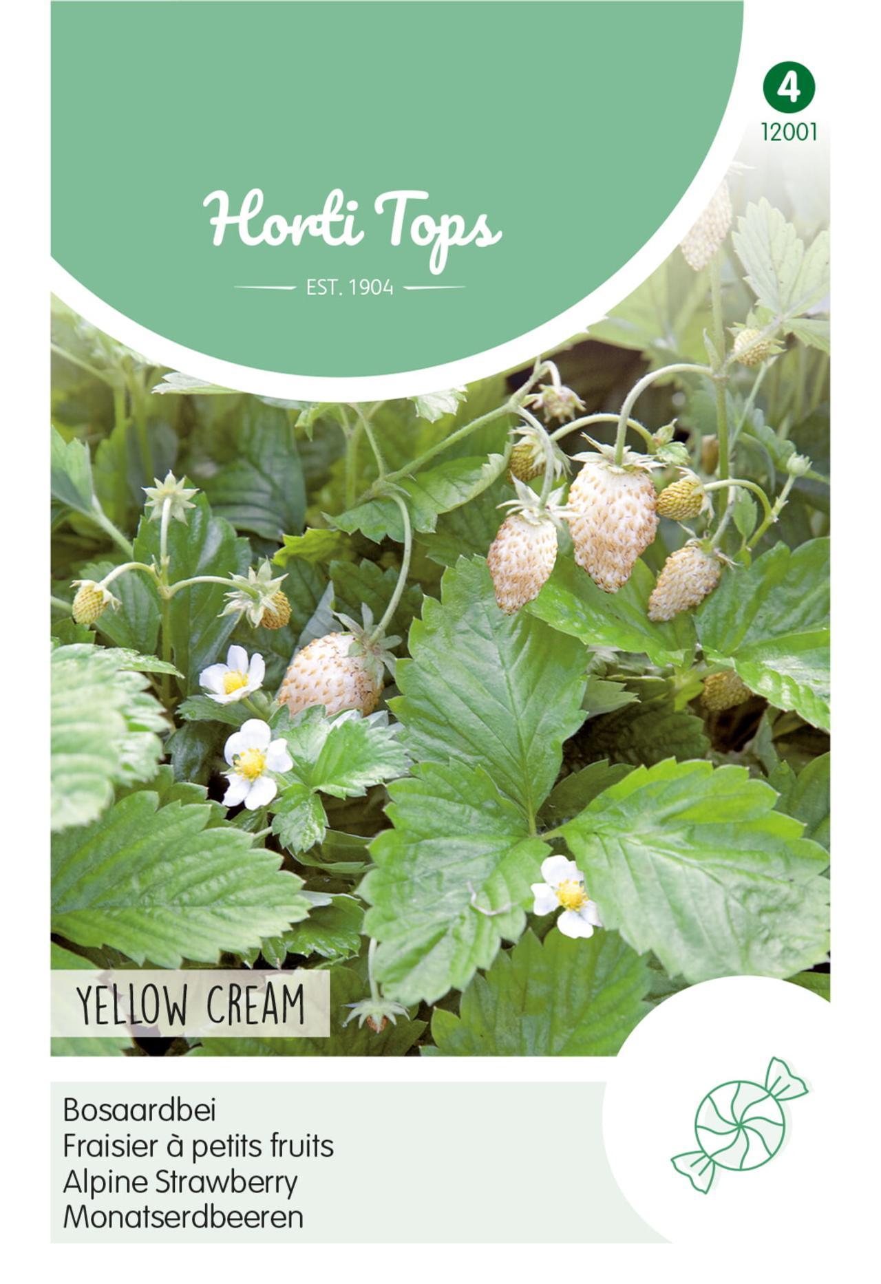Fragaria vesca 'Yellow Cream' plant