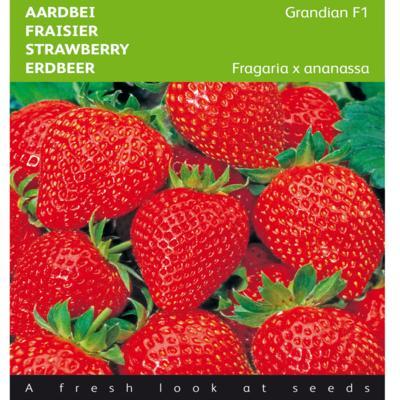 fragaria-x-ananassa-grandian-f1
