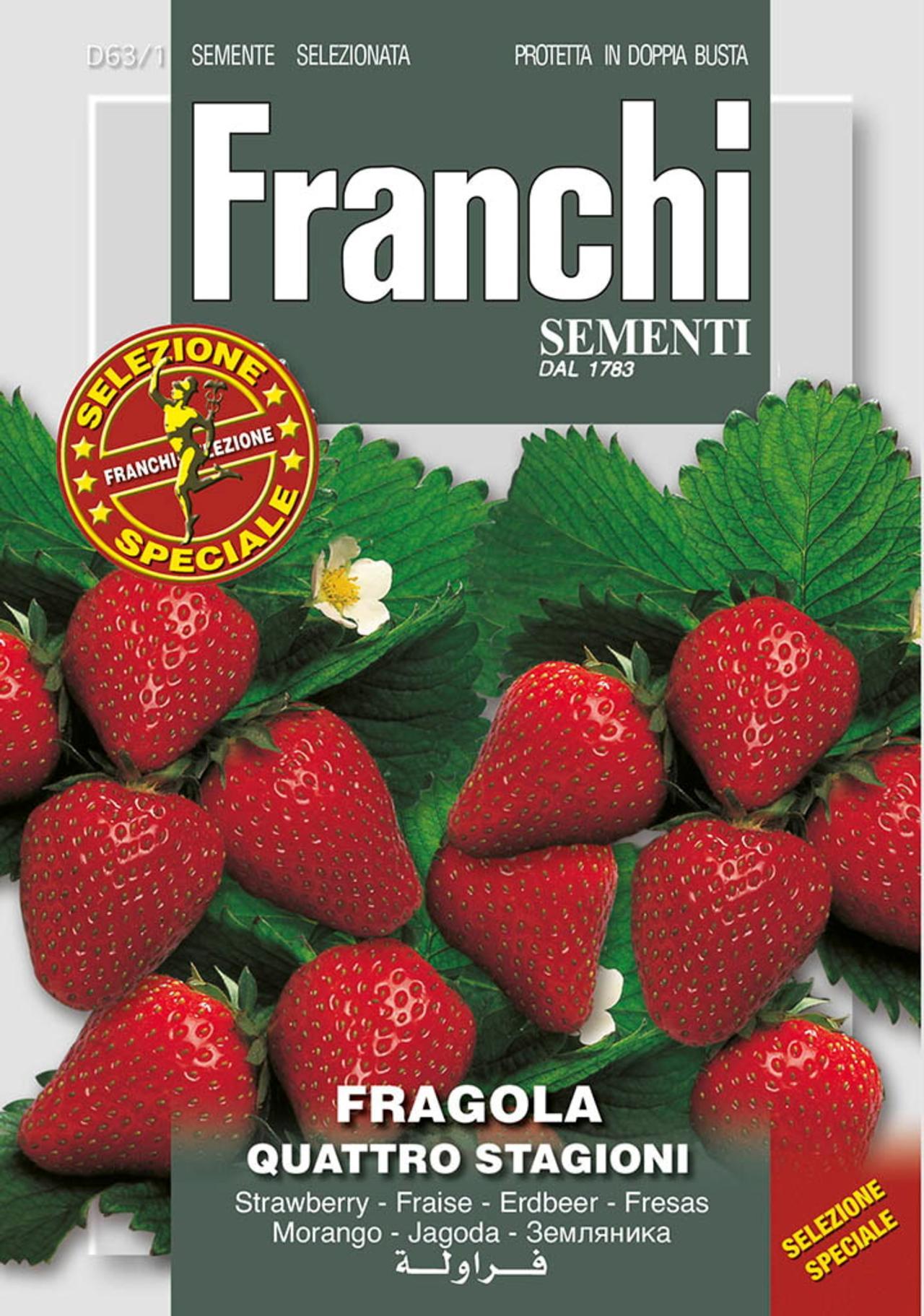 Fragaria x ananassa 'Quatro Stagioni' plant