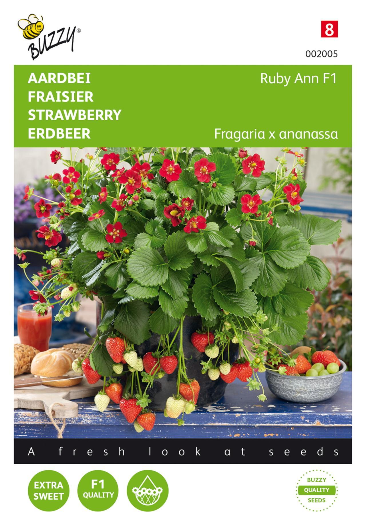 Fragaria x ananassa 'Ruby Ann F1' plant