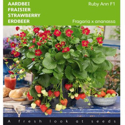 fragaria-x-ananassa-ruby-ann-f1