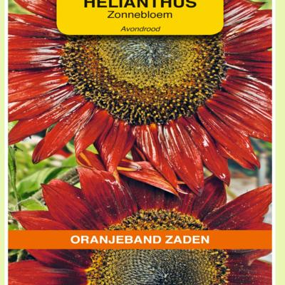 helianthus-annuus-avondrood