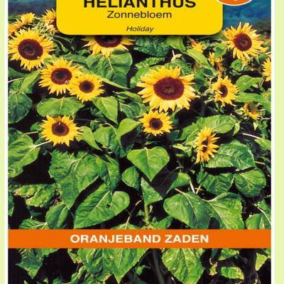 helianthus-annuus-holiday